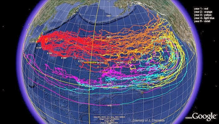 The Pacific Ocean Is Dying The Millennium Report - Japan radiation map 2014