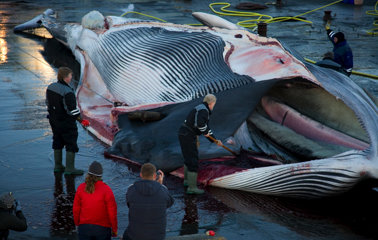 Japan Whaling Controversy 88